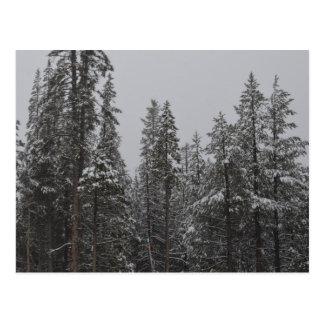 Winter Woods - Lake Tahoe, CA Postcard