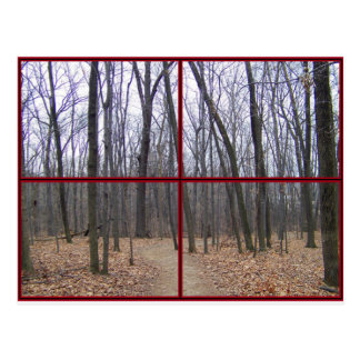 Winter Woods Scenic Window View-Post Card Postcard