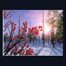 Winterberry in Ice Postcard
