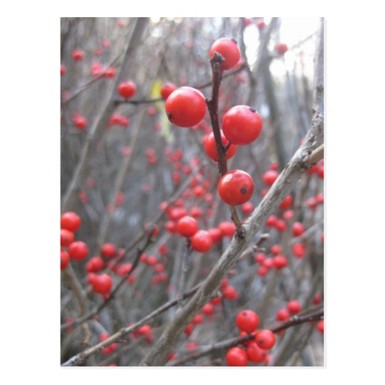 winterberry postcard