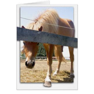 Winterhorse Card