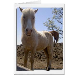 Winterhorse Perspective Card