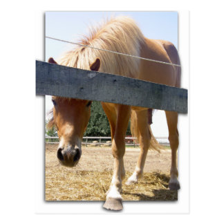 Winterhorse Postcard