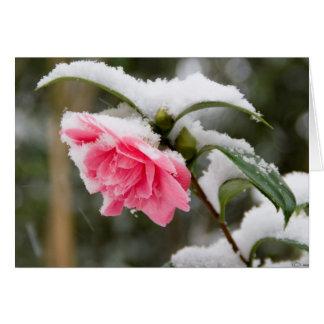 winterRose Card