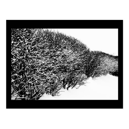 winter's hedge post cards