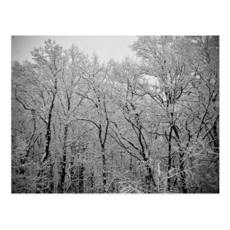 Winter's last breath postcards