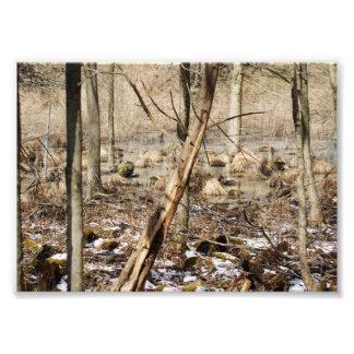Winters Thaw 7x5 Photographic Print