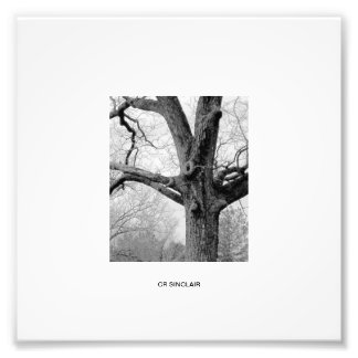 WINTER'S UNDRESSING by CR SINCLAIR Photo Print