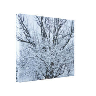 WINTERS WHITE BEAUTY canvas