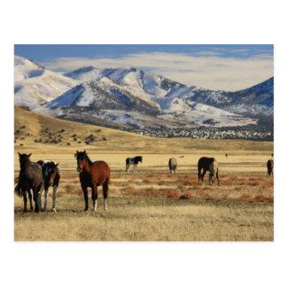 Winter's Wind Postcard