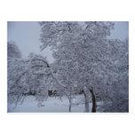 winterstorm2010(Oklahoma) Post Cards