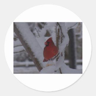 winterstorm2010 (pájaro rojo) pegatina redonda