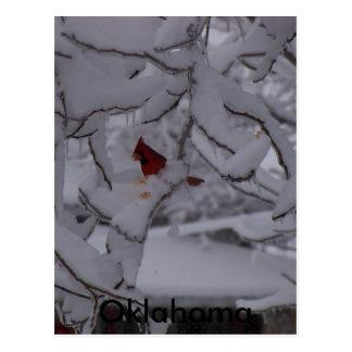 winterstorm2010 (pájaro rojo) postal