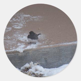 winterstorm2010 (pájaros salvajes) pegatina redonda