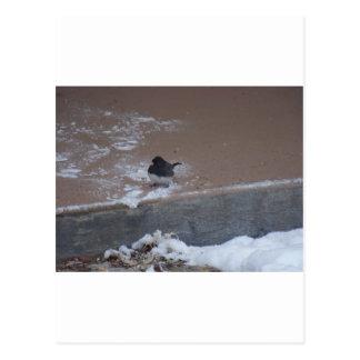winterstorm2010 (pájaros salvajes) postal