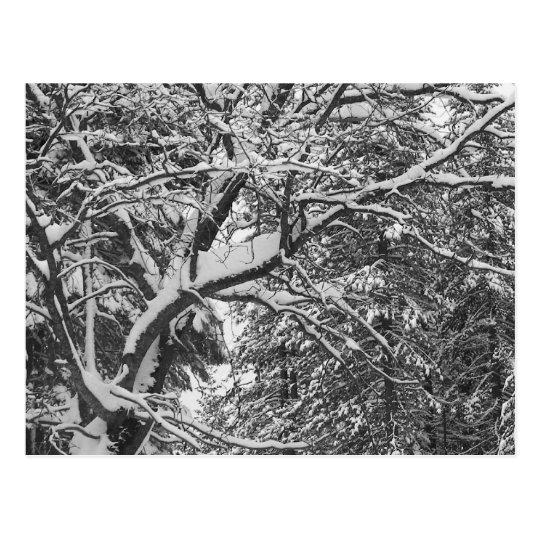 WinterTree Postcard