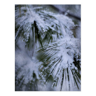 Wintery Pine Post Cards