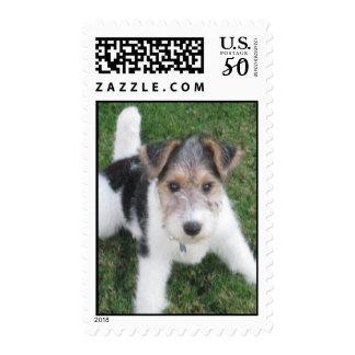 Wire Fox Terrier Puppy Stamp