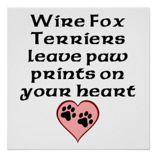 Wire Fox Terriers Leave Paw Prints On Your Heart Poster