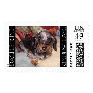 Wire Hair Dachshund Stamp