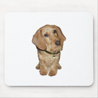 Wire Haired Dachshund (F) Mouse Pad