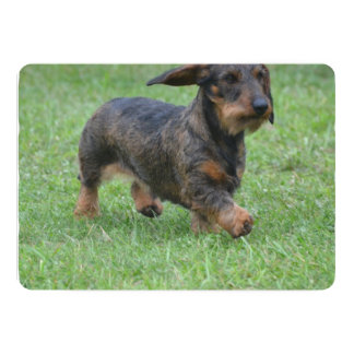Wire Haired Dachshund Personalized Announcements