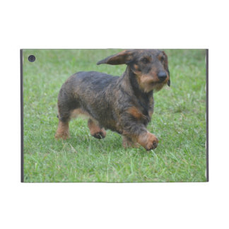 Wire Haired Dachshund iPad Mini Cover