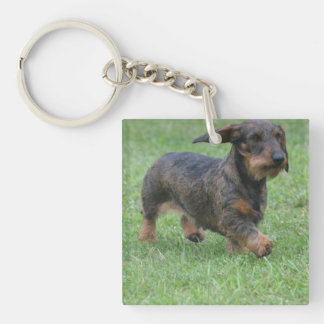 Wire Haired Dachshund Square Acrylic Keychain