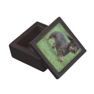 Wire Haired Dachshund Premium Gift Boxes