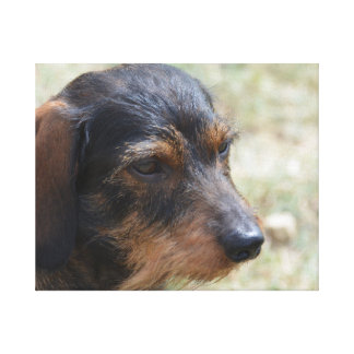 Wire Haired Daschund Dog Canvas Print
