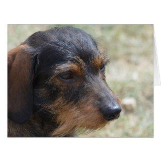 Wire Haired Daschund Dog Card