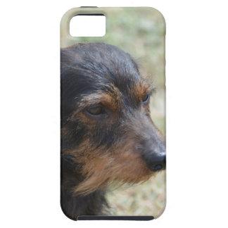 Wire Haired Daschund Dog iPhone SE/5/5s Case
