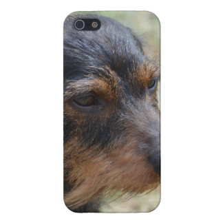 Wire Haired Daschund Dog iPhone SE/5/5s Cover