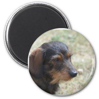 Wire Haired Daschund Dog Magnet