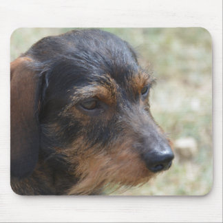 Wire Haired Daschund Dog Mouse Pad