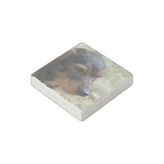 Wire Haired Daschund Dog Stone Magnet