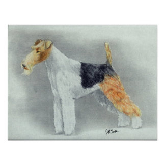 Wire Haired Fox Terrier Dog Portrait Poster