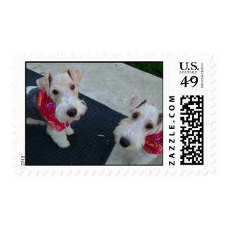 Wire Haired Fox Terriers Stamps