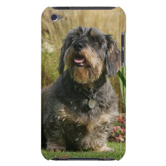 Wire-haired Standard Dachshund Barely There iPod Case
