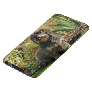 Wire-haired Standard Dachshund Barely There iPod Cover
