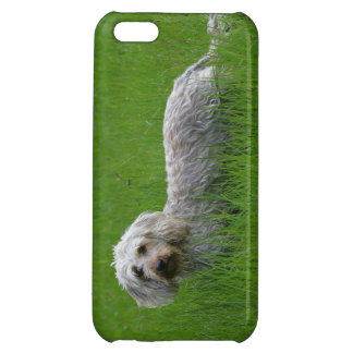 Wire-haired Standard Dachshund in Grass Cover For iPhone 5C