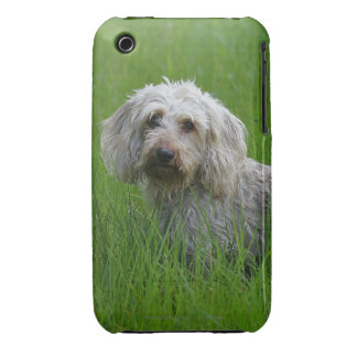 Wire-haired Standard Dachshund in Grass iPhone 3 Covers