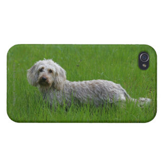 Wire-haired Standard Dachshund in Grass iPhone 4/4S Cover