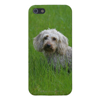 Wire-haired Standard Dachshund in Grass iPhone SE/5/5s Case