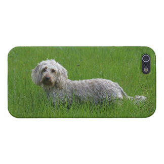 Wire-haired Standard Dachshund in Grass iPhone SE/5/5s Cover