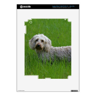 Wire-haired Standard Dachshund in Grass Skin For iPad 3