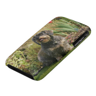 Wire-haired Standard Dachshund iPhone 3 Case