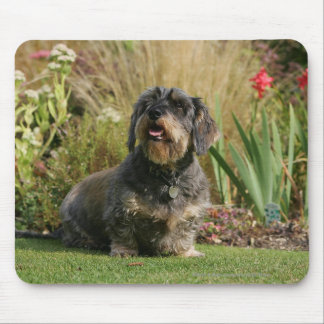 Wire-haired Standard Dachshund Mouse Pad