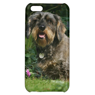 Wire-haired Standard Dachshund Sitting Case For iPhone 5C