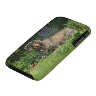 Wire-haired Standard Dachshund Sitting iPhone 3 Case-Mate Case